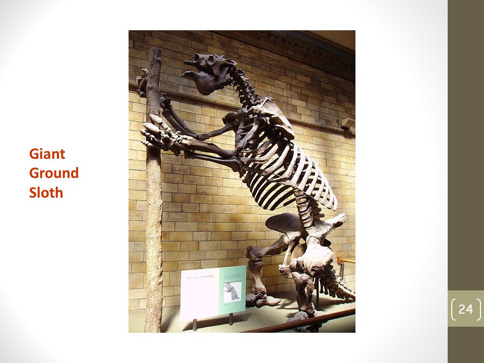 Giant Ground Sloth