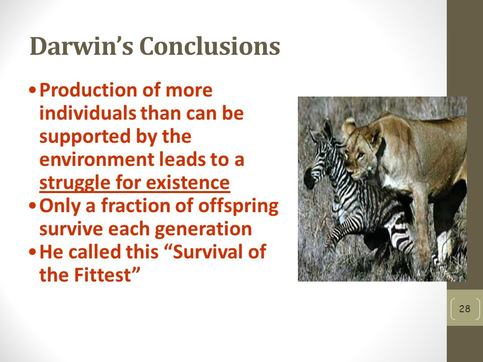 Darwin's Conclusions Production of more individuals than can be supported by the environment leads to a struggle for existence.