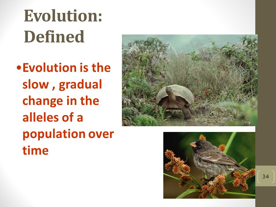 Evolution: Defined Evolution is the slow , gradual change in the alleles of a population over time
