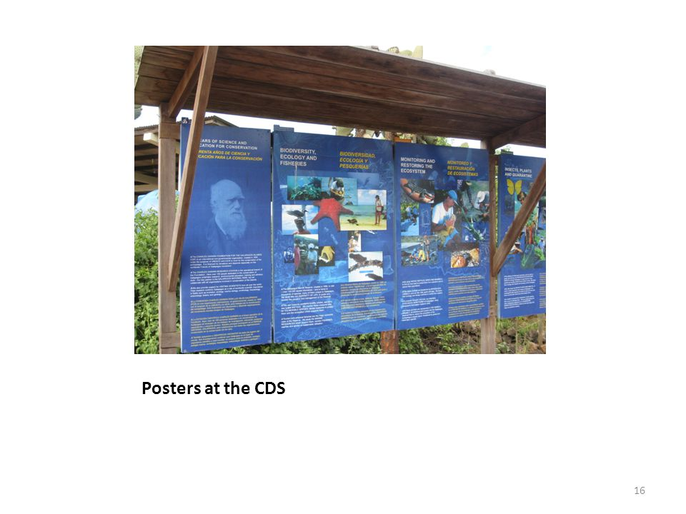 Posters at the CDS
