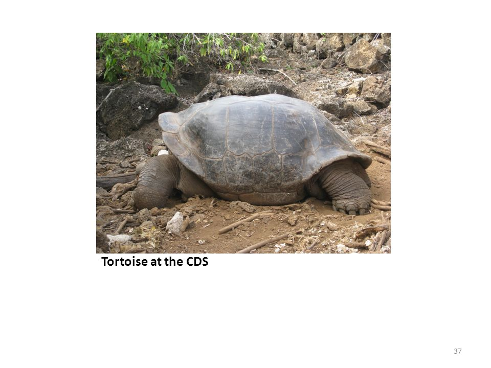 Tortoise at the CDS