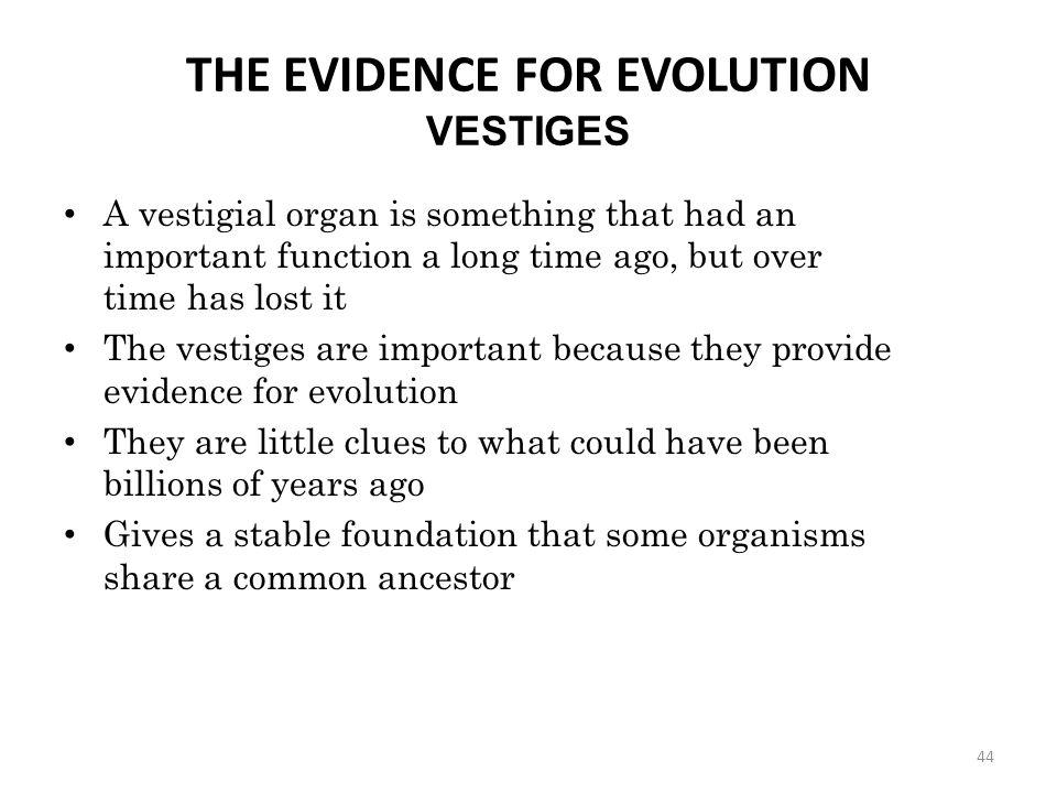 THE EVIDENCE FOR EVOLUTION VESTIGES