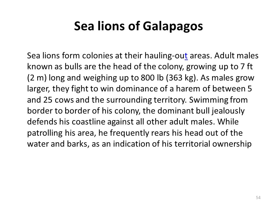 Sea lions of Galapagos