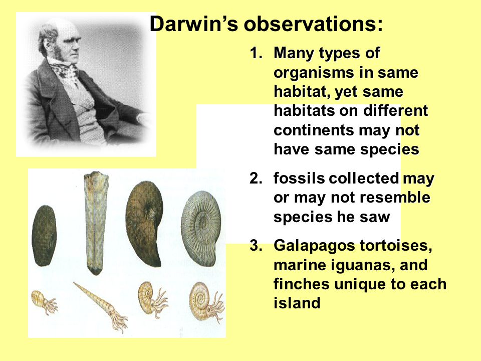 Darwin's observations: