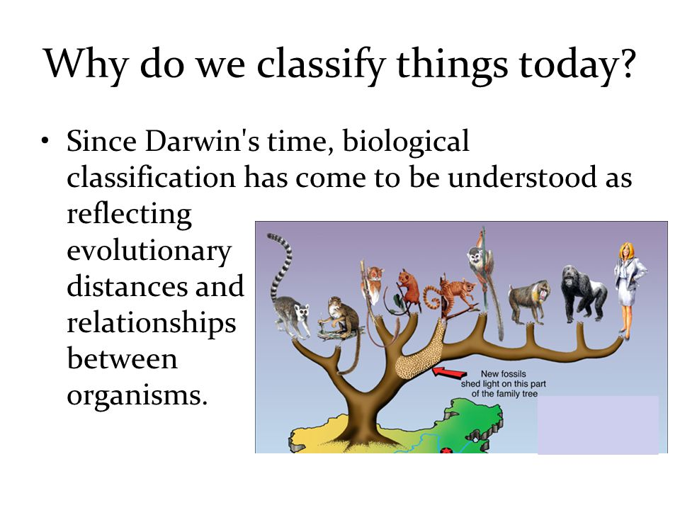 Why do we classify things today