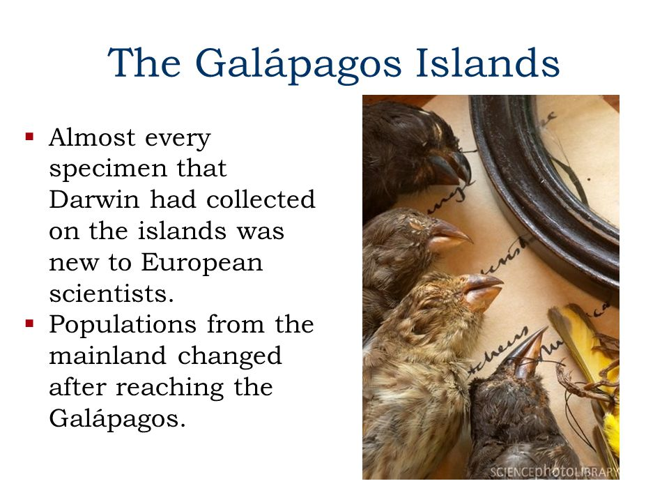 The Galápagos Islands Almost every specimen that Darwin had collected on the islands was new to European scientists.