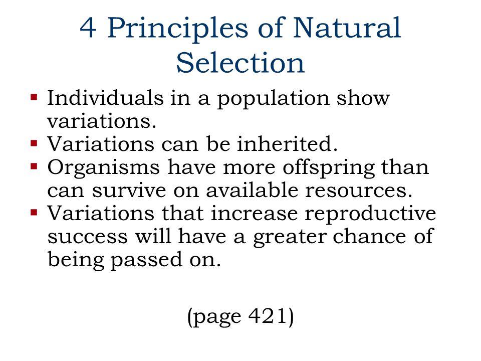 4 Principles of Natural Selection