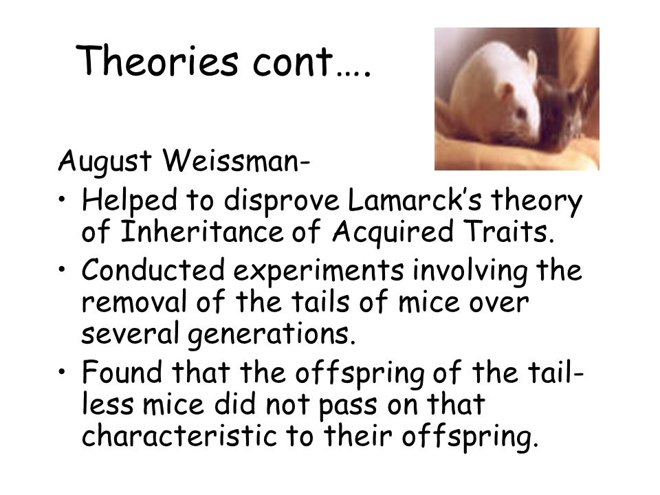 Theories cont…. August Weissman-