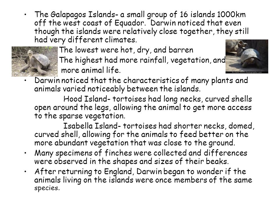 The Galapagos Islands- a small group of 16 islands 1000km off the west coast of Equador. Darwin noticed that even though the islands were relatively close together, they still had very different climates.