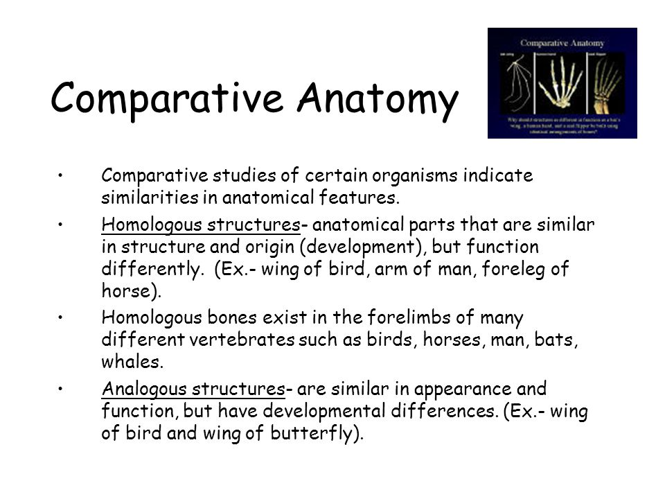 Comparative Anatomy Comparative studies of certain organisms indicate similarities in anatomical features.