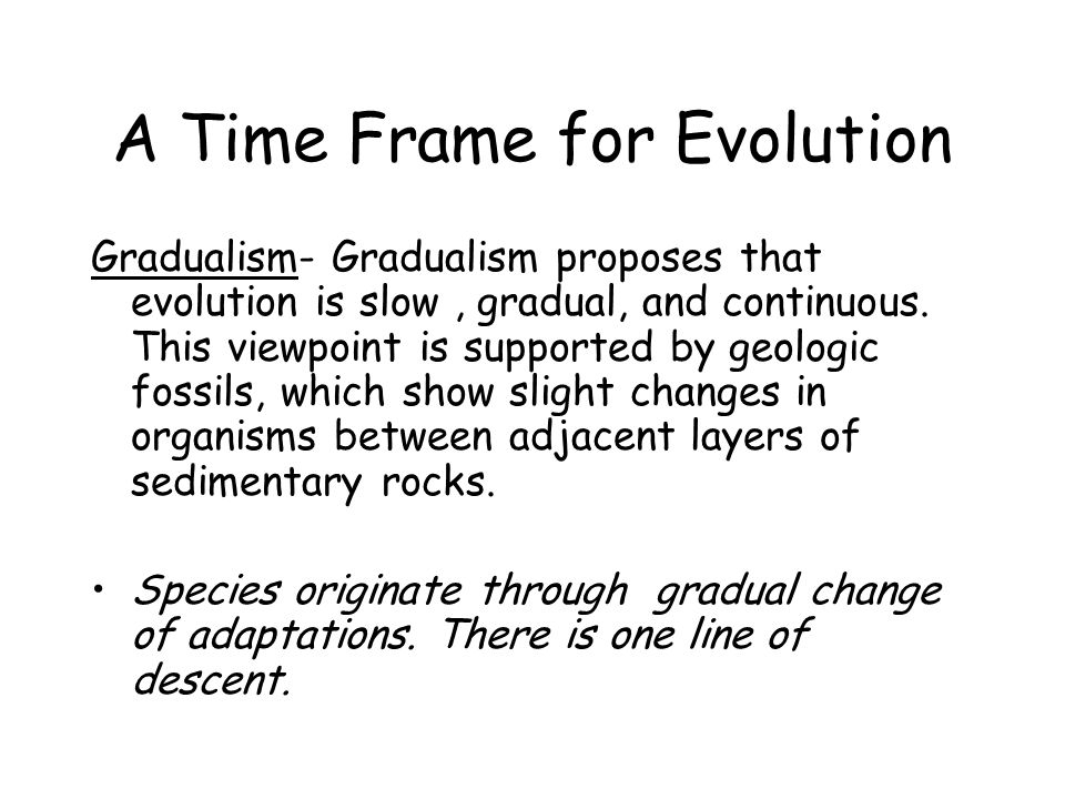 A Time Frame for Evolution