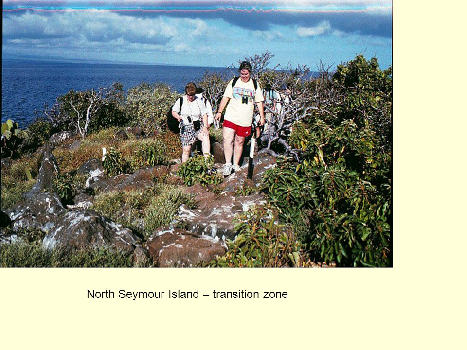 North Seymour Island – transition zone