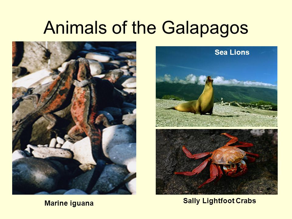 Animals of the Galapagos