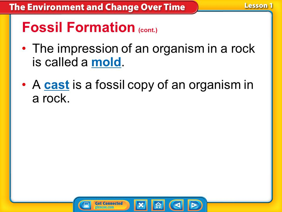 Fossil Formation (cont.)