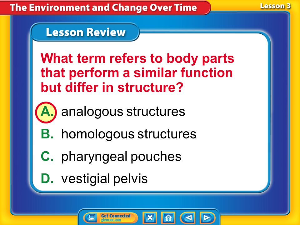A. analogous structures B. homologous structures C. pharyngeal pouches