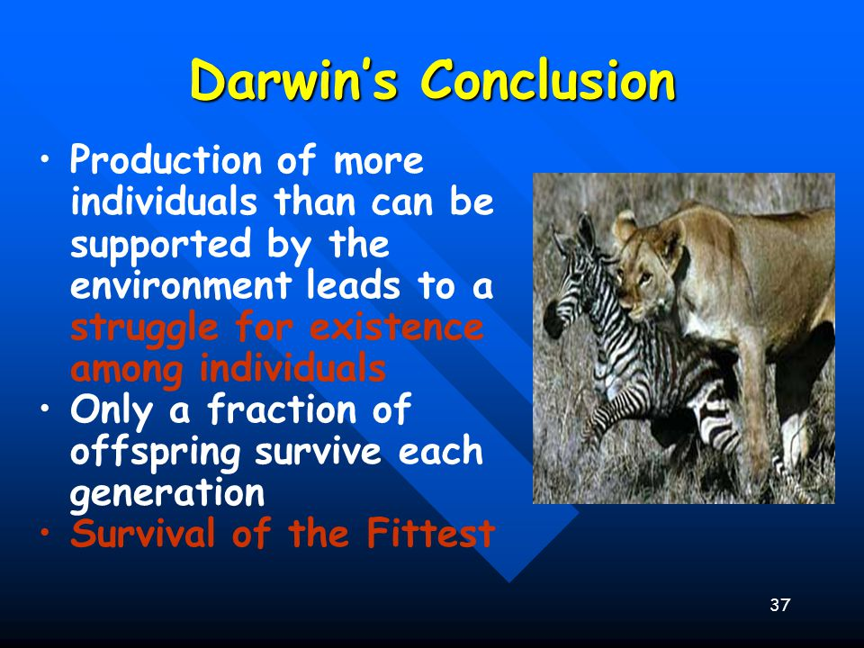 Darwin's Conclusion Production of more individuals than can be supported by the environment leads to a struggle for existence among individuals.