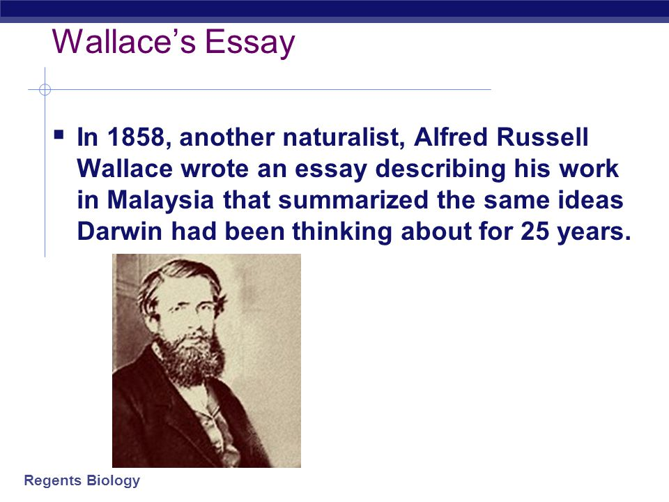 Wallace's Essay