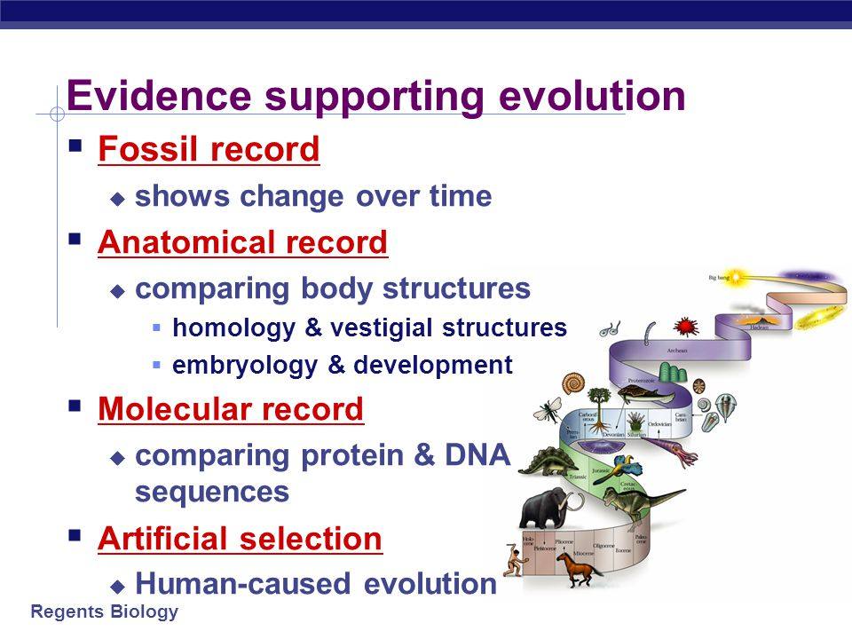 Evidence supporting evolution