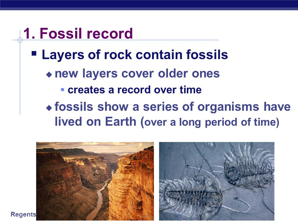 1. Fossil record Layers of rock contain fossils