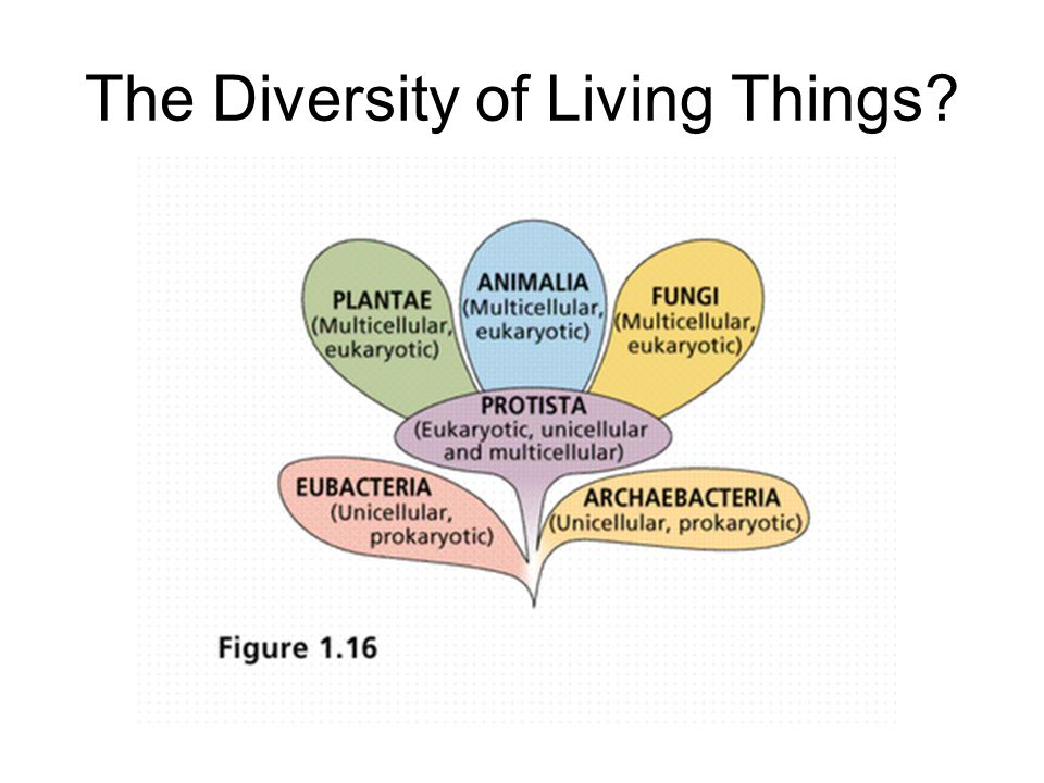 The Diversity of Living Things