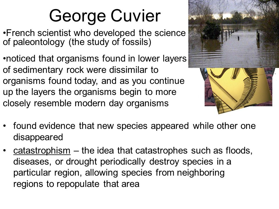 George Cuvier French scientist who developed the science of paleontology (the study of fossils)