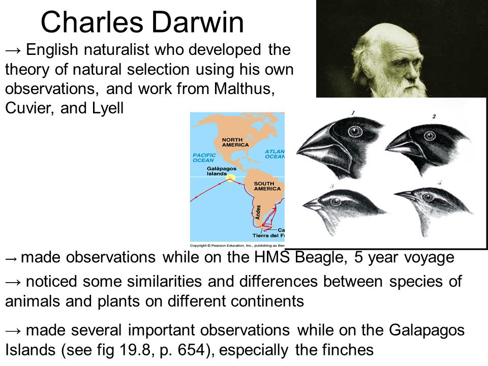 The observations of charles darwin leading to the theory of evolution by natural selection