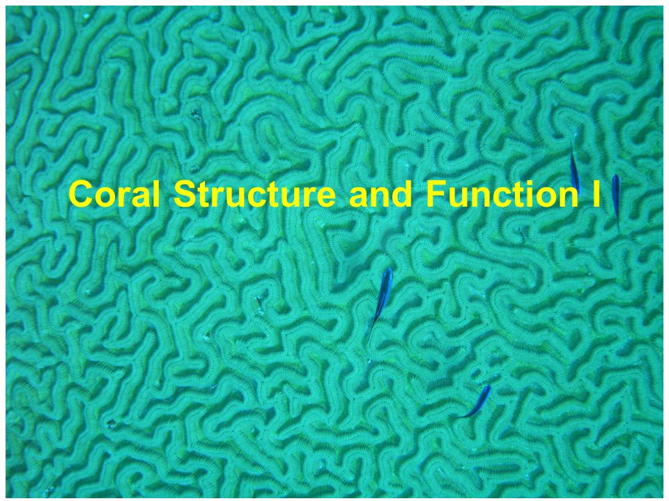 Coral Structure and Function I