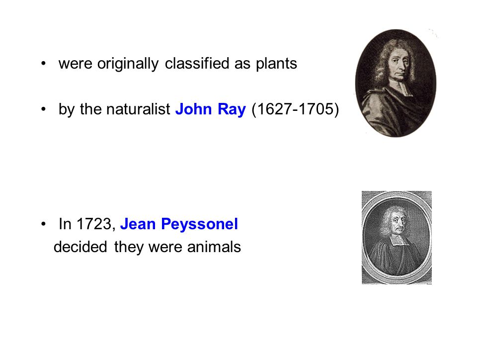 were originally classified as plants