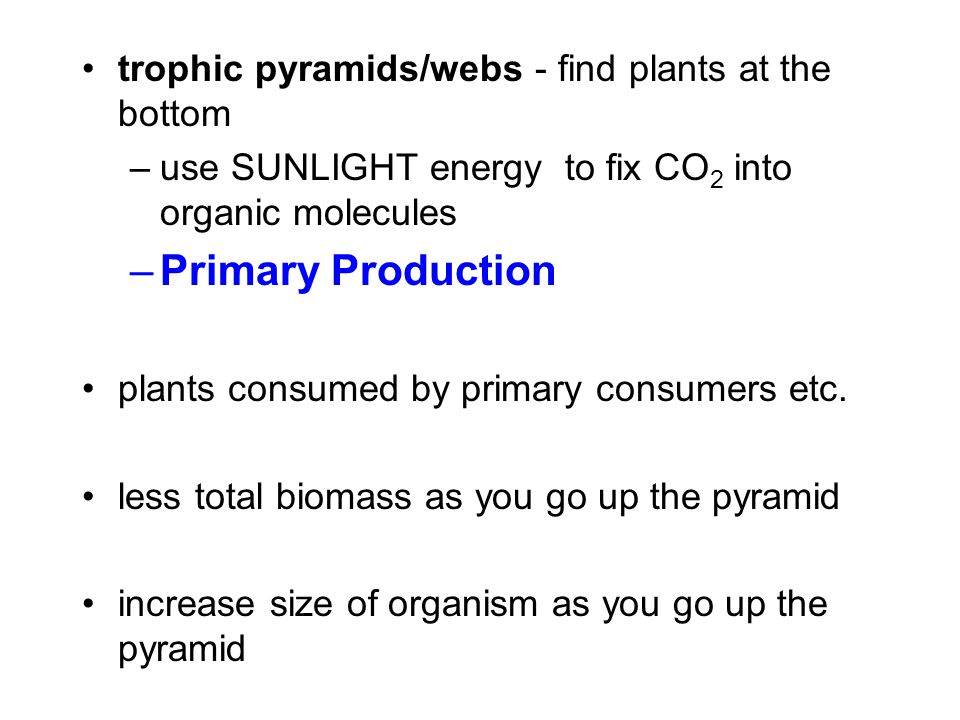 Primary Production trophic pyramids/webs - find plants at the bottom