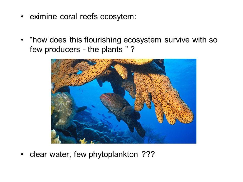 eximine coral reefs ecosytem: