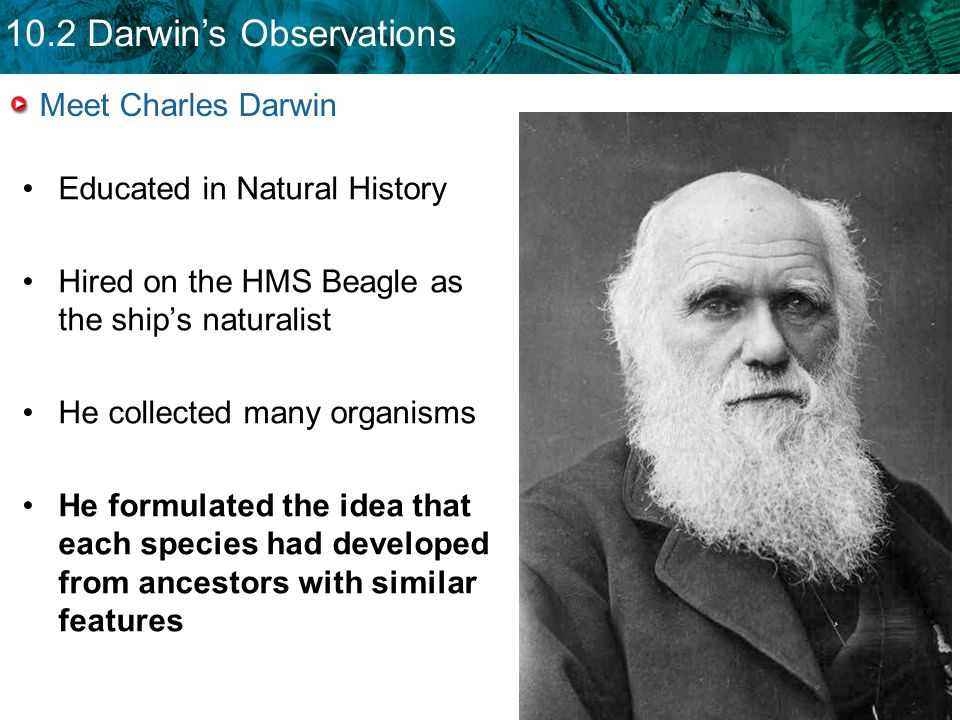 the imperialism observation of charles darwin Is the transference of charles darwin's biological ideas to ethical and social   to the anglo-saxon imperialist, or to the rising capitalist  his observations.