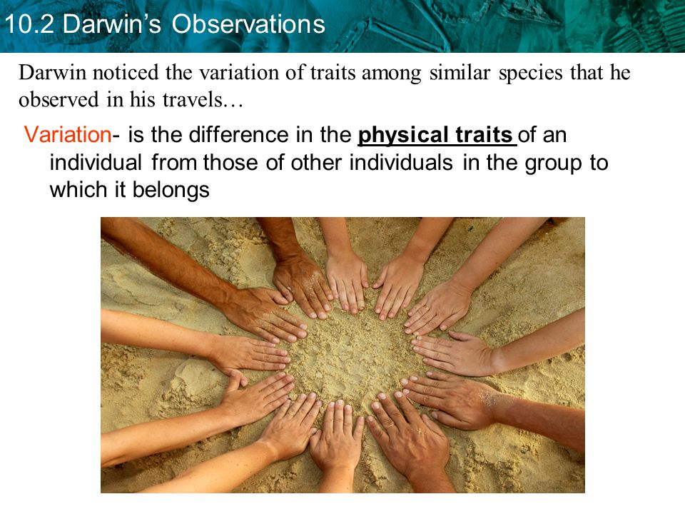 10.2 Darwin's Observations