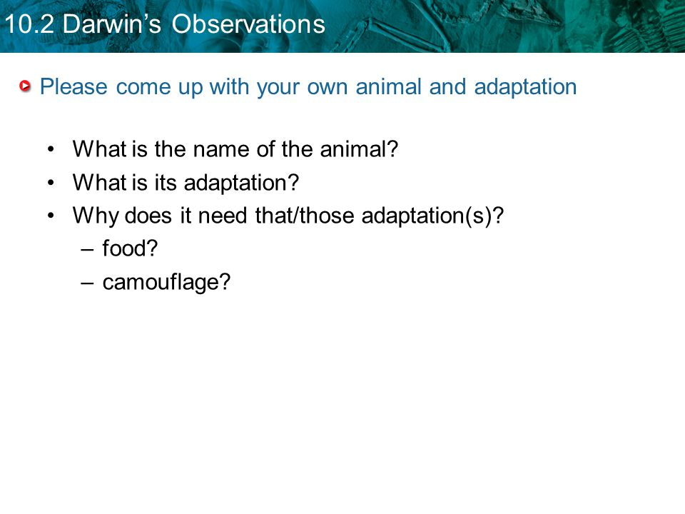 Please come up with your own animal and adaptation
