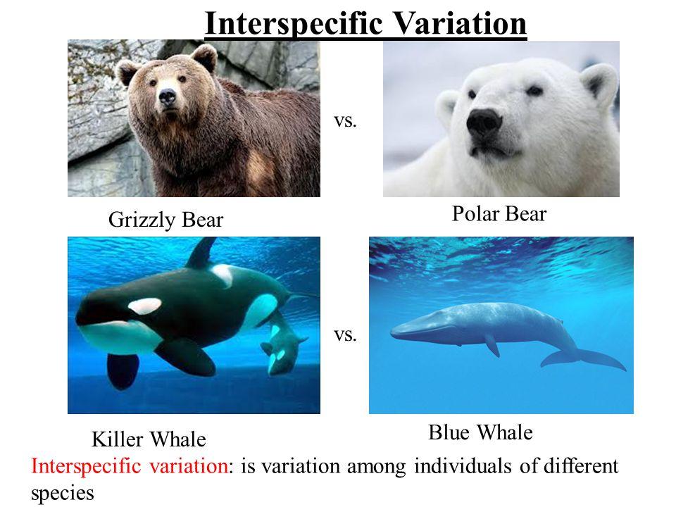 Interspecific Variation
