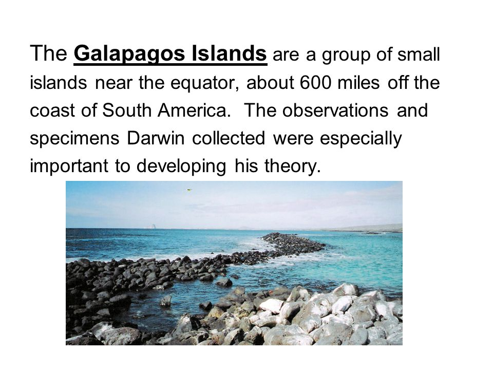 The Galapagos Islands are a group of small