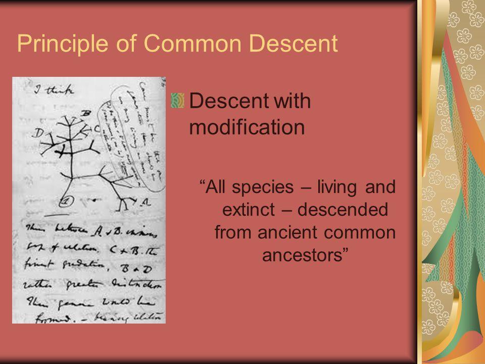 Principle of Common Descent