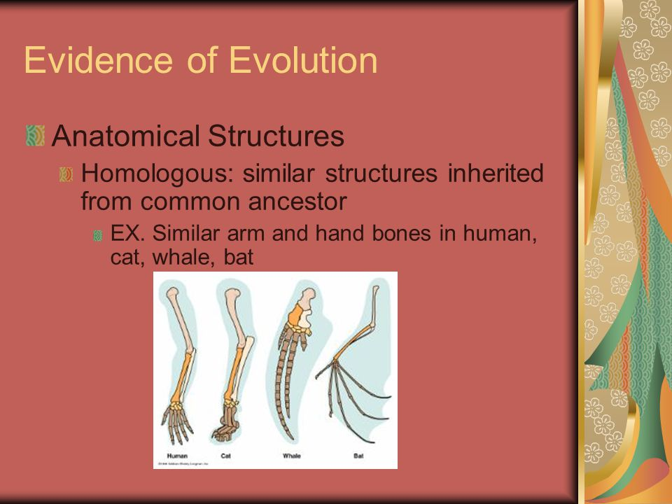 Evidence of Evolution Anatomical Structures