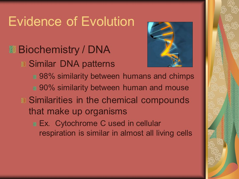 Evidence of Evolution Biochemistry / DNA Similar DNA patterns