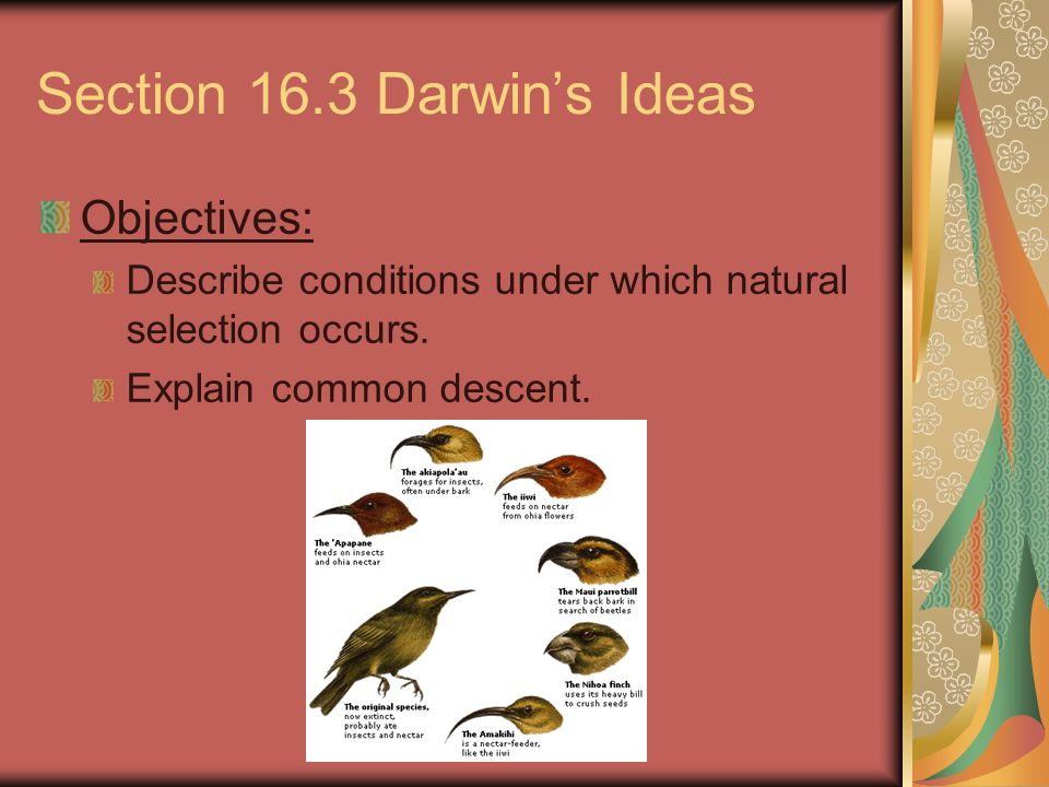Section 16.3 Darwin's Ideas