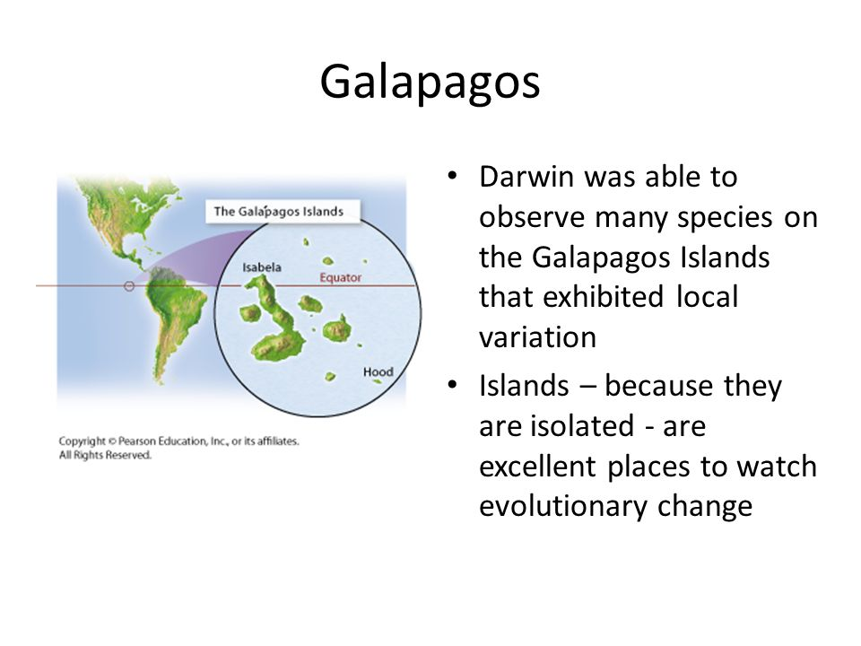 Galapagos Darwin was able to observe many species on the Galapagos Islands that exhibited local variation.
