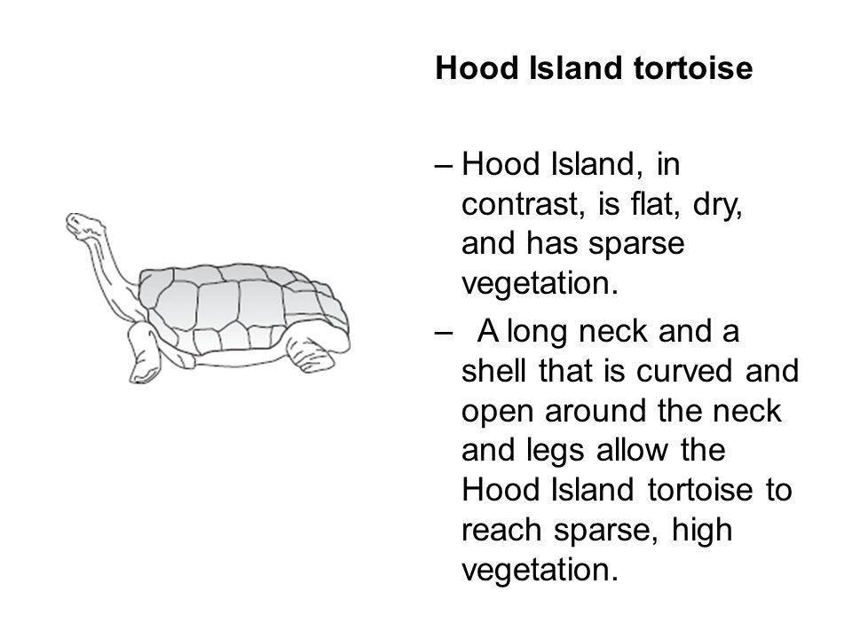 Hood Island tortoise Hood Island, in contrast, is flat, dry, and has sparse vegetation.