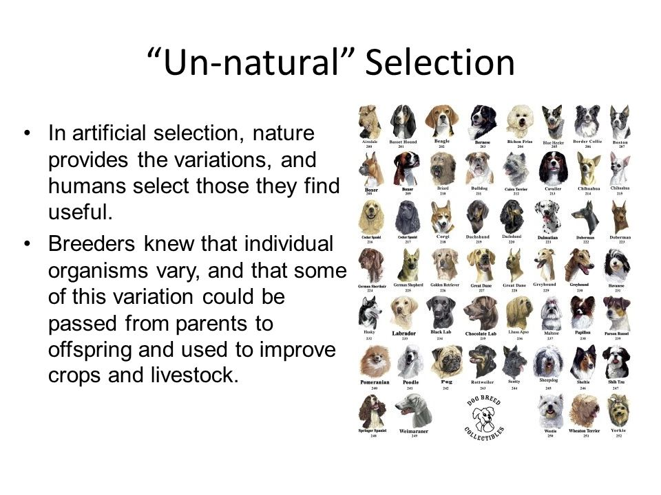 Un-natural Selection