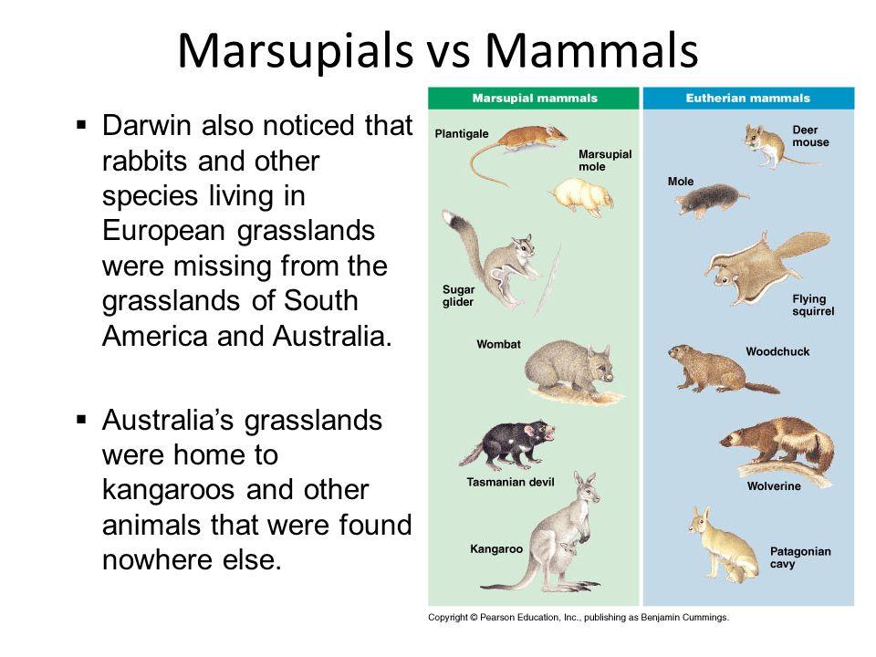 Marsupials vs Mammals