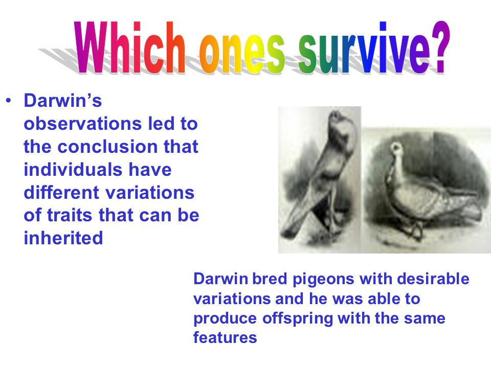 Which ones survive Darwin's observations led to the conclusion that individuals have different variations of traits that can be inherited.