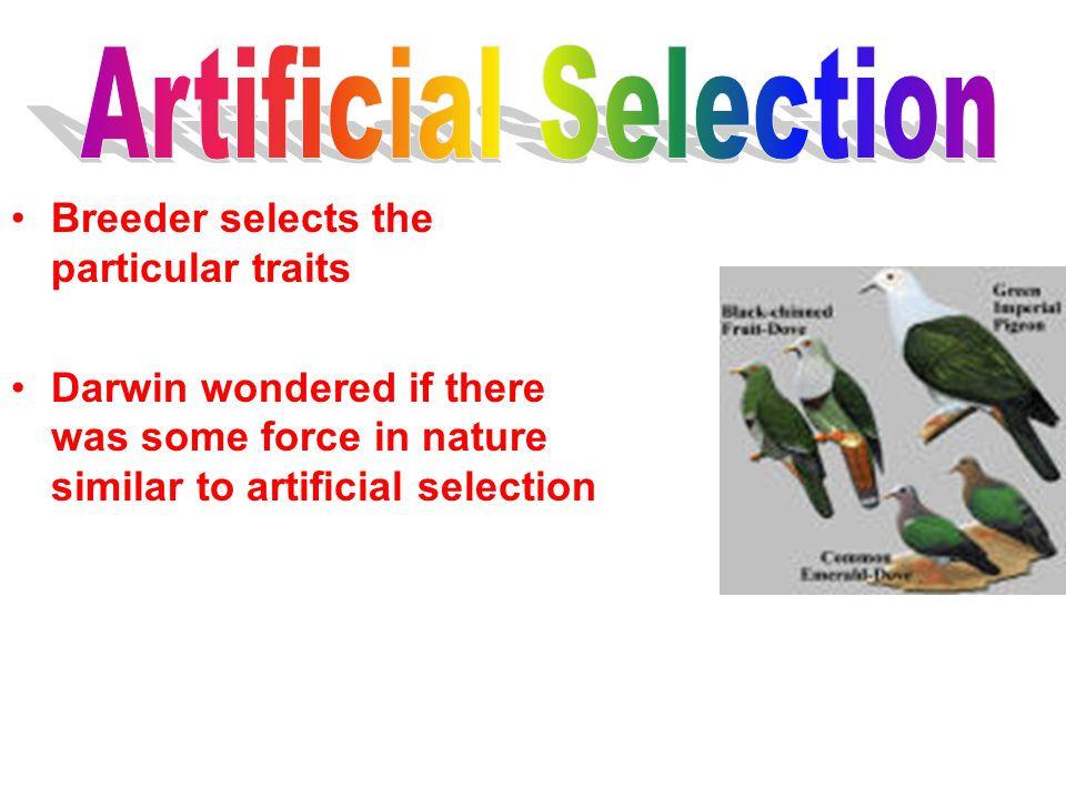 Artificial Selection Breeder selects the particular traits
