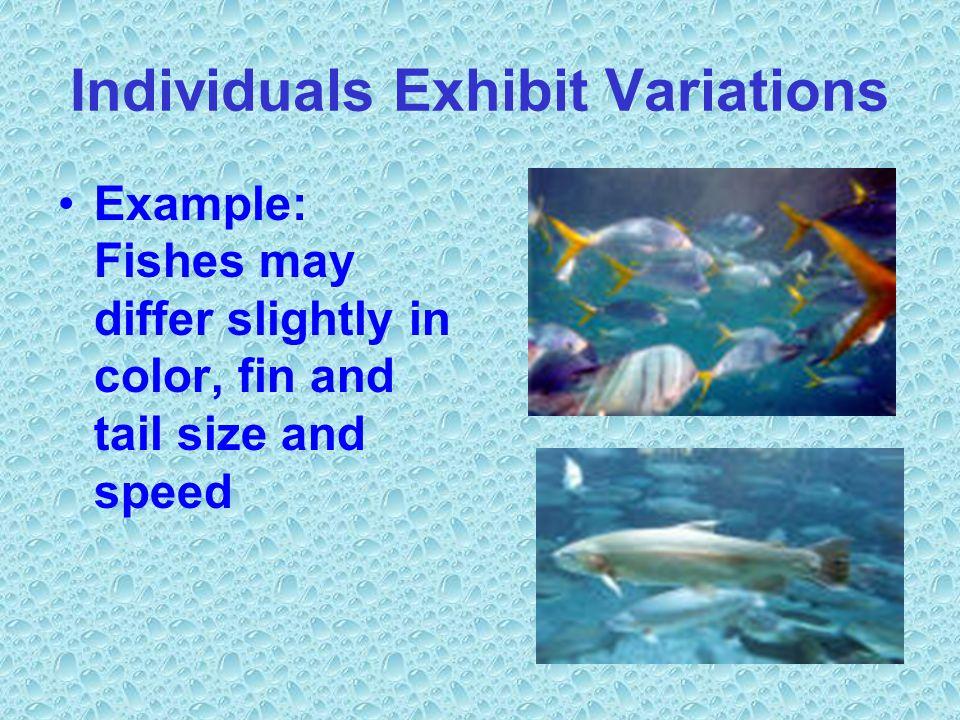 Individuals Exhibit Variations