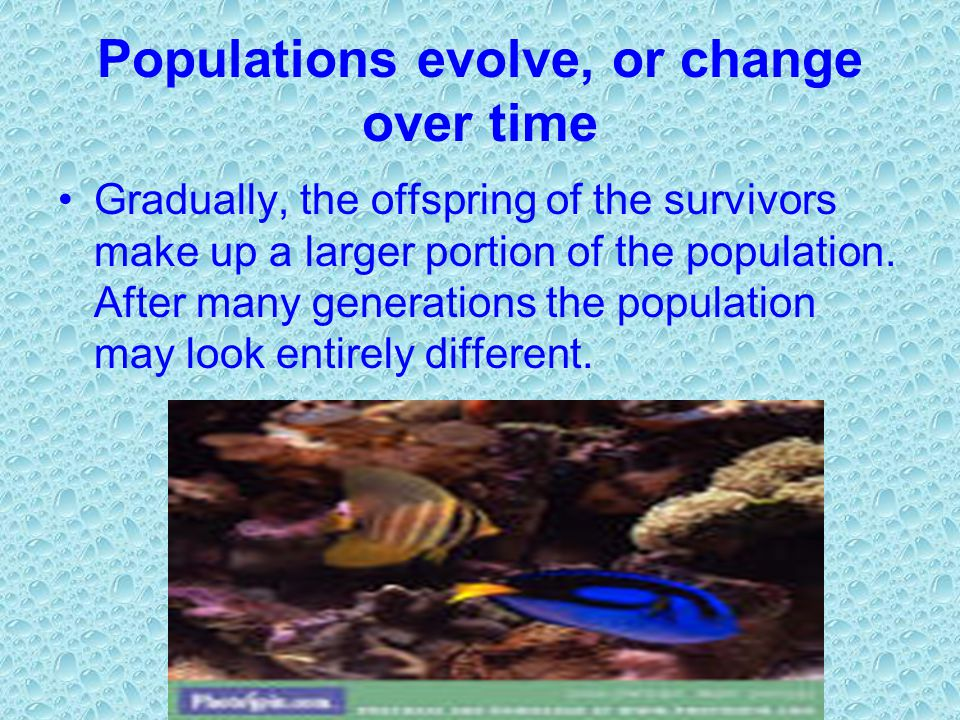 Populations evolve, or change over time