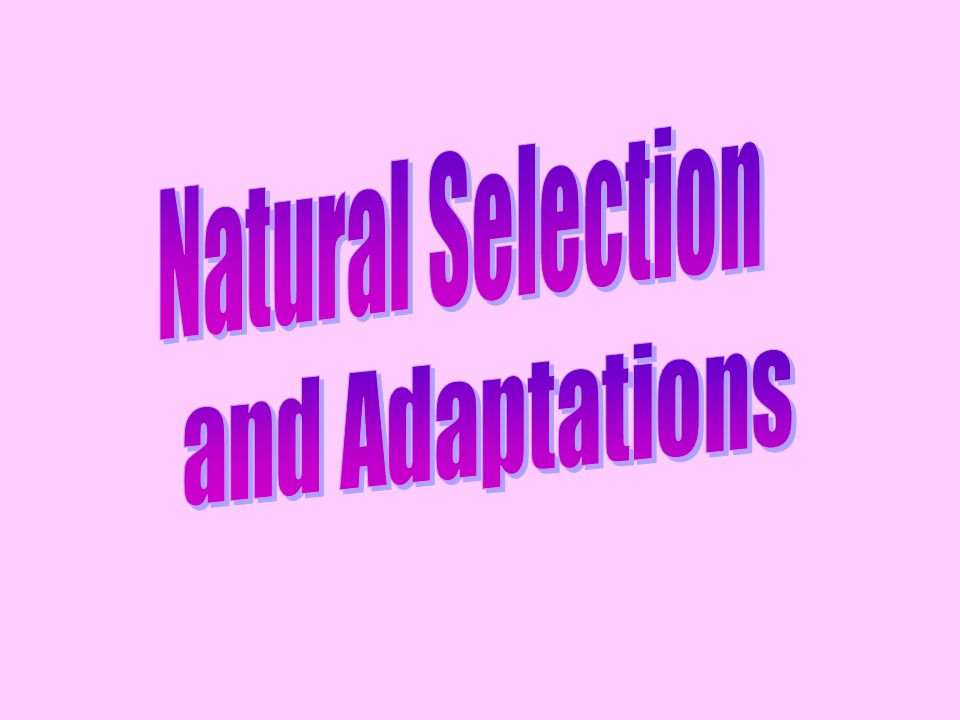 Natural Selection and Adaptations