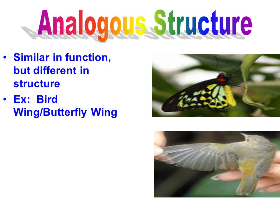 Analogous Structure Similar in function, but different in structure