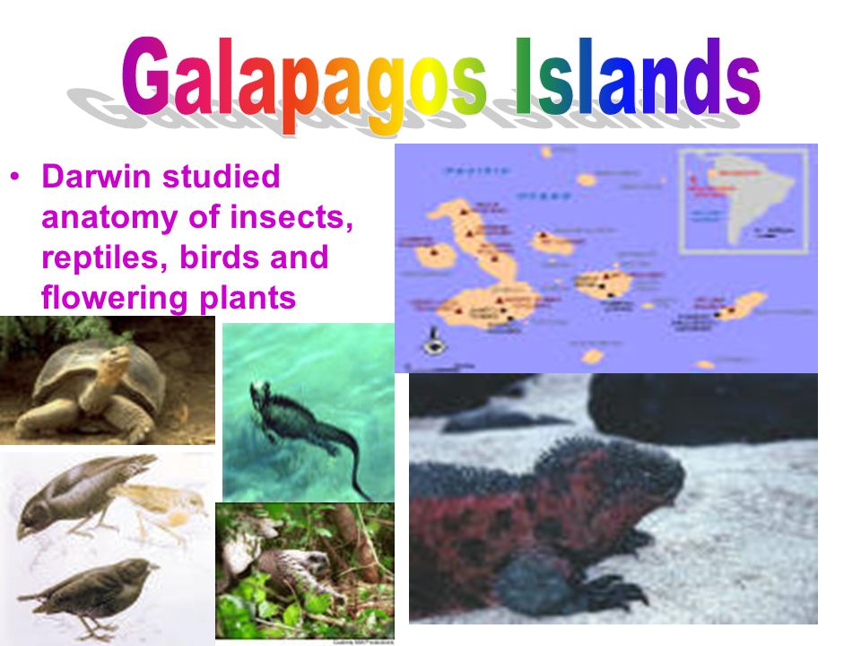 Galapagos Islands Darwin studied anatomy of insects, reptiles, birds and flowering plants
